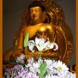 BuddhaFlowers